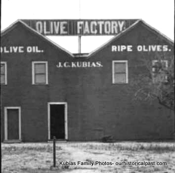 Bohiemian brand Olive Factory